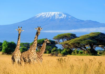 Giraffes & Mountain Wall Mural