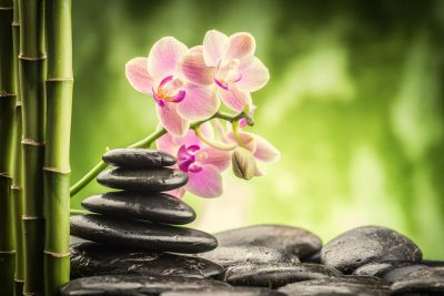 Zen Basalt Stones, Orchid Flower and Bamboo Wall Mural