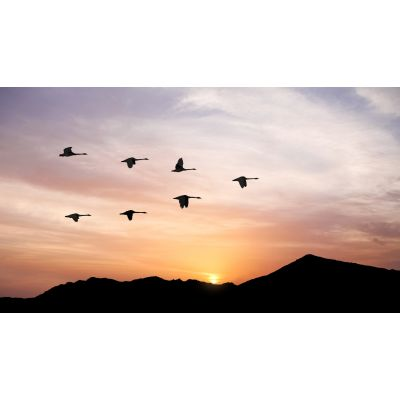 Birds Flying at Sunset Wall Mural
