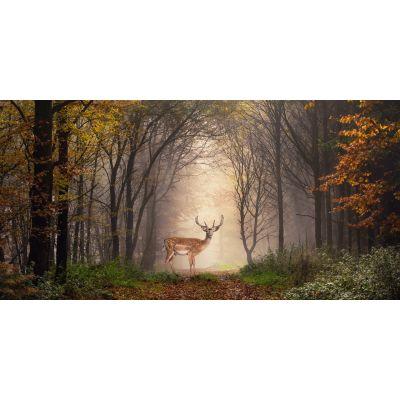 Deer in Woods Wall Mural