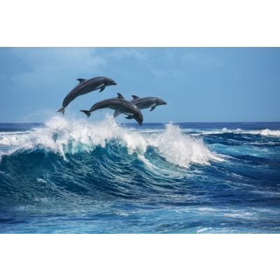 Dolphins Diving Wall Mural