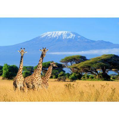 Giraffes & Mountain Wall Mural