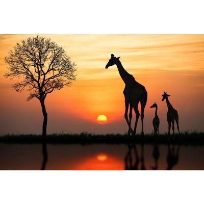 Giraffes in Sunset Wall Mural