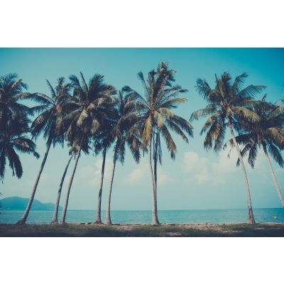 Row of Palm Trees Wall Mural