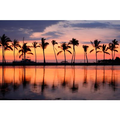 Palm Trees and Sunset Wall Mural
