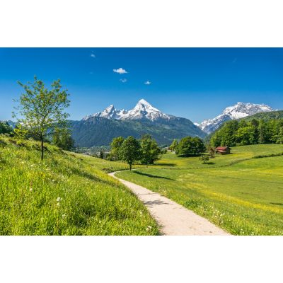 Alps from Walk Path Wall Mural