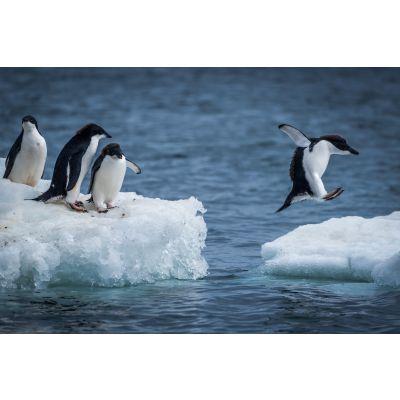 Penguins on Iceberg Wall Mural
