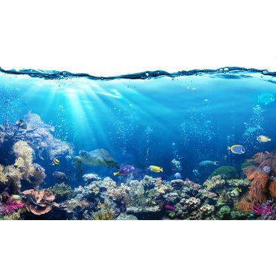 Tropical Fish & Reef Wall Mural