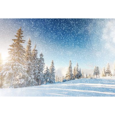 Snowy Forest Trees Wall Mural