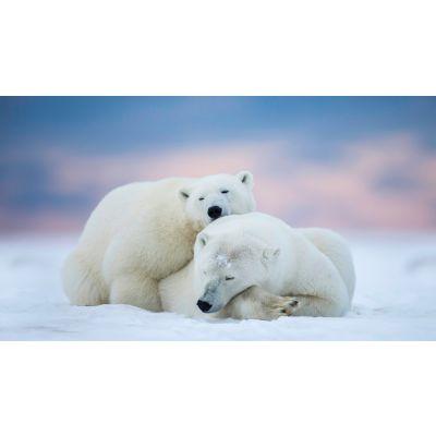 Sleeping Polar Bears Wall Mural