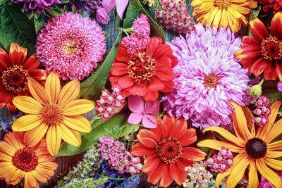 Multicoloured Flower Wall Mural